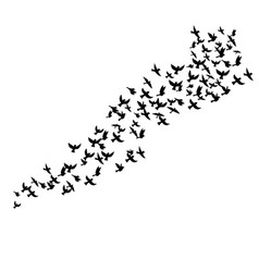 Flying birds silhouettes vector