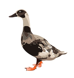 Grey duck vector