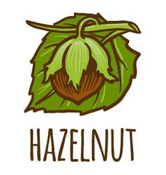 Hazelnut icon hand drawn style vector