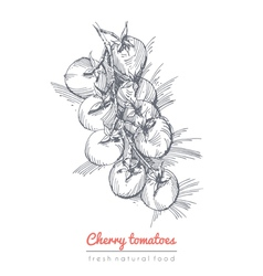 Cherry tomatoes vector image vector image