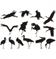 stork silhouettes vector image