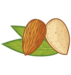 Almond with leaves vector