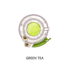 Green tea drawing - top view a glass cup with vector