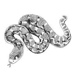 Monochrome desert saw scaled viper snake vector
