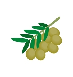 Olives on branch with leaves icon isometric 3d vector