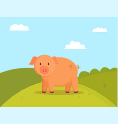Pig on green glade image of fatty domestic pet vector