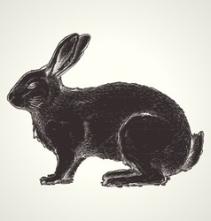 Rabbit vintage vector