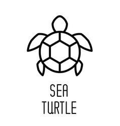 Sea turtle line icon vector
