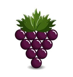grape cluster icon image vector image
