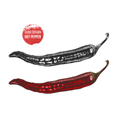 hand drawn of chili pepper vector image