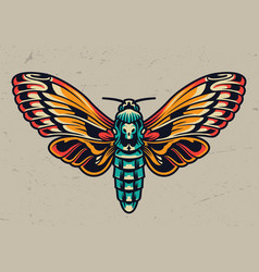 colorful beautiful butterfly in vintage style vector image