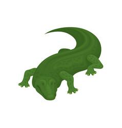 Crocodile amphibian animal on vector