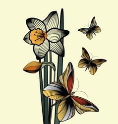 contour delicate flower narcissus vector image