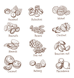 Doodle nuts hand drawn set isolate on vector
