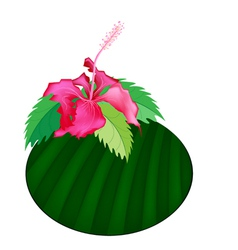 Fresh Red Hibiscus Flowers on Banana Leaf vector image