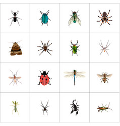Realistic poisonous housefly locust and other vector