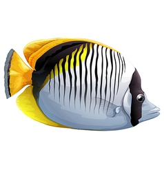 Spot-nape butterflyfish vector image