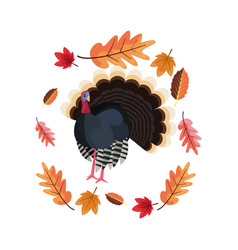 Thanksgiving turkey and wreath leaves vector