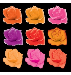 set of colorful roses vector image vector image