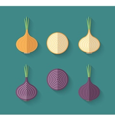 A set of Vegetables in a Flat Style - Onion vector image