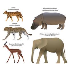 Animals africa vector