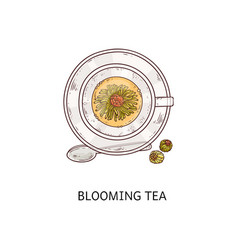 blooming tea - top view glass cup with open vector image