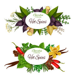 herbs and hot spices seasonings banners vector image