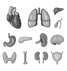 human organs monochrome icons in set collection vector image