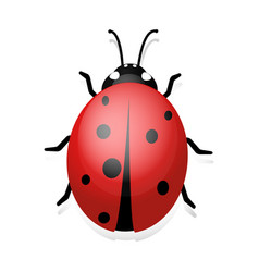 ladybug clip art of ladybug vector image