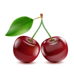 two ripe red cherry berries with leaf vector image