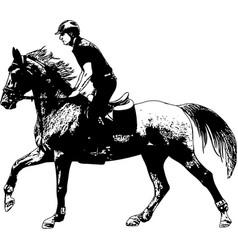 young horseman riding elegant horse sketch vector image