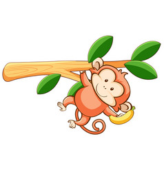 Cute monkey on white background vector