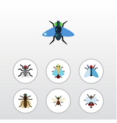 Flat icon buzz set of housefly buzz mosquito and vector