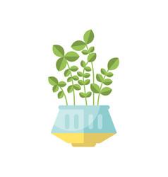 Green house plant indoor flower in pot elegant vector