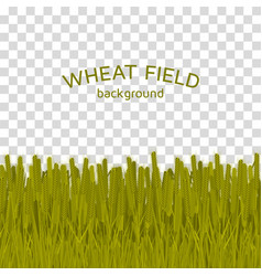 Green wheat field on checkered background vector