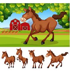 horses at the farmland vector image