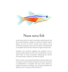 Neon tetra aquarium fish isolated on white graphic vector