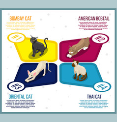 Purebred cats isometric infographics vector
