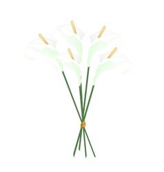 White Anthurium Bouquet or Flamingo Bouquet vector