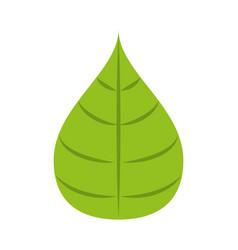 leaf ecology symbol vector image vector image