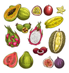 Sketch icons of exotic tropical fruits vector