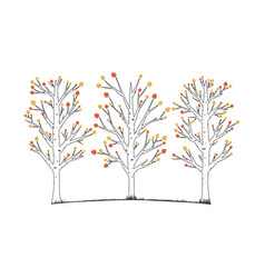 aspen trees vector image