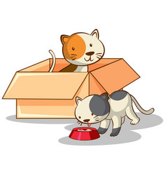 cute cats in box on white background vector image