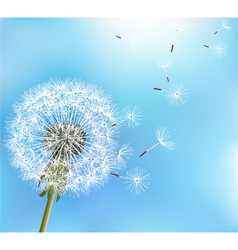 Flower dandelion on blue background vector
