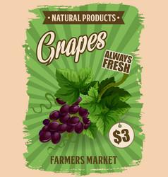 Grapes fruit natural farm product vector