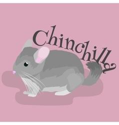 Pets Gray chinchilla domestic animals vector