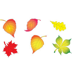 Set of autumn leaves from trees vector