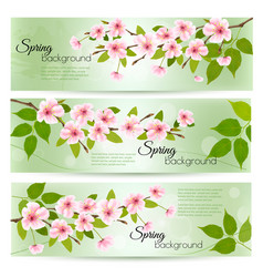 spring nature background with cherry branch and vector image