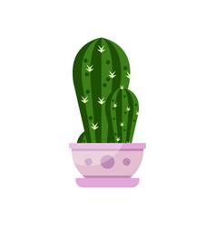cactus house plant indoor flower in pot elegant vector image