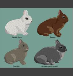 Composition four easter rabbit vector